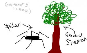 spider BIG