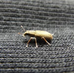 bug on sleeve